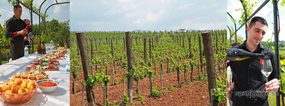 toplicki vinogradi